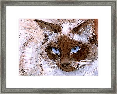 Birman Cat - Blue Eyes. Framed Print by Svetlana Ledneva-Schukina