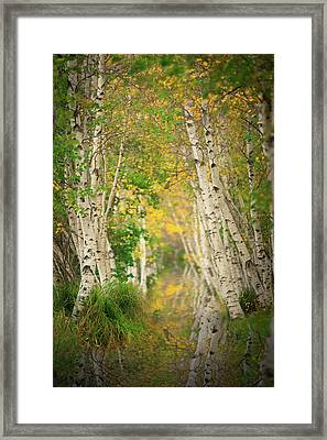Framed Print featuring the photograph Birtch Row  by Emmanuel Panagiotakis