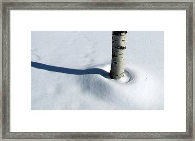 Framed Print featuring the photograph Birtch Tree Shadow by Douglas Pike