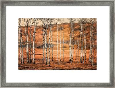 Birtch Trees Framed Print by Naman Imagery