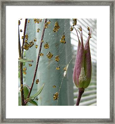 Framed Print featuring the photograph Birth Of A Spider by Pamela Patch