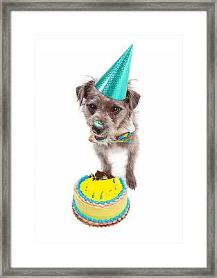 Birthday Dog Eating Cake Framed Print