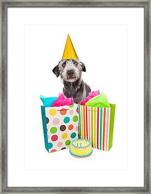 Birthday Party Dog Presents And Cake Framed Print by Susan Schmitz