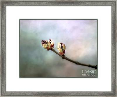 Framed Print featuring the photograph Birthing Of A Lilac by Brenda Bostic
