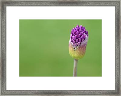 Framed Print featuring the photograph Birthing Springtime by Linda Mishler