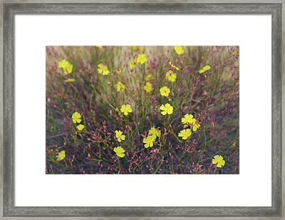 Framed Print featuring the photograph Bisbee Peak Rushrose by Alexander Kunz