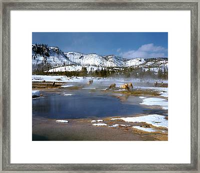 Biscuit Basin Elk Herd Framed Print