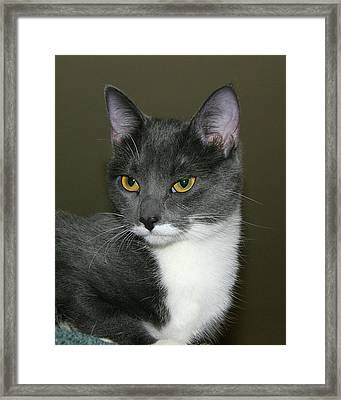 Framed Print featuring the photograph Biscuit by Doris Potter