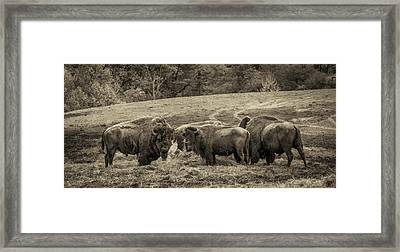 Framed Print featuring the photograph Bison 1 - Pano by Joye Ardyn Durham