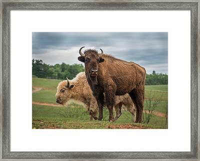Framed Print featuring the photograph Bison 10 by Joye Ardyn Durham