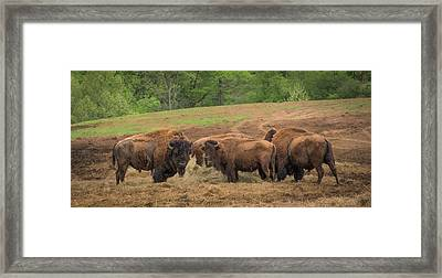 Framed Print featuring the photograph Bison 2 by Joye Ardyn Durham