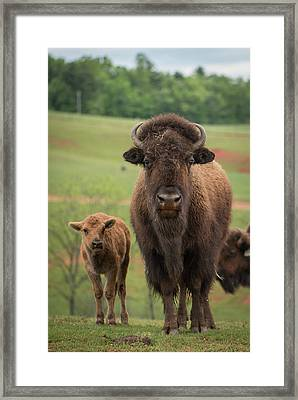 Framed Print featuring the photograph Bison 4 by Joye Ardyn Durham