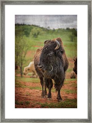 Framed Print featuring the photograph Bison 5 by Joye Ardyn Durham