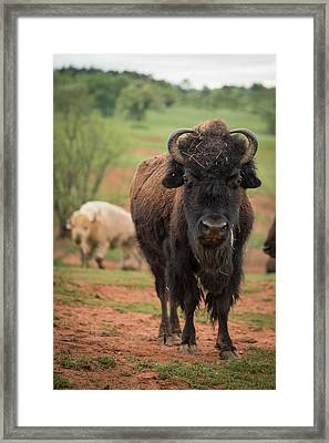 Framed Print featuring the photograph Bison 6 by Joye Ardyn Durham