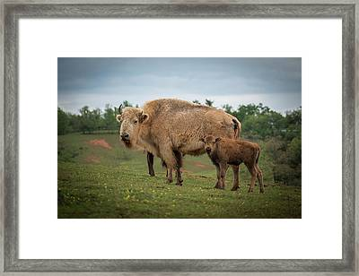 Framed Print featuring the photograph Bison 7 by Joye Ardyn Durham