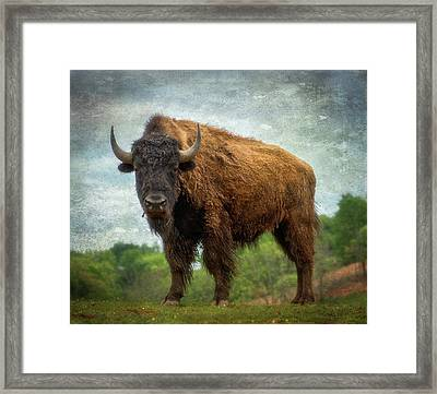 Framed Print featuring the photograph Bison 9 by Joye Ardyn Durham