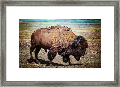 Framed Print featuring the photograph Bison And The Birds by Mary Hone