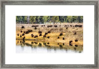 Bison At Indian Pond Framed Print