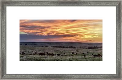 Bison At Sunrise Framed Print