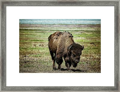 Framed Print featuring the photograph Bison Bird Bus by Mary Hone