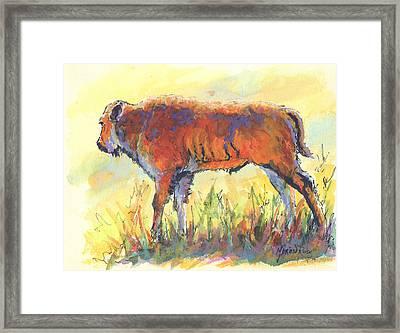 Bison Calf Framed Print by Marion Rose