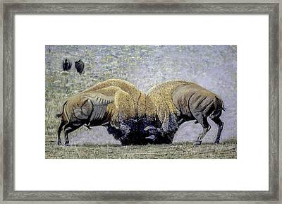 Bison Fight Original Oil Painting 60x36x1.5 Inch Framed Print by Manuel Lopez
