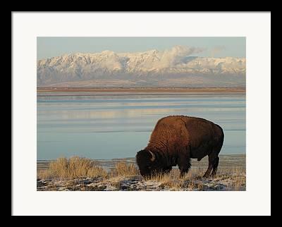 The Great Salt Lake Framed Prints