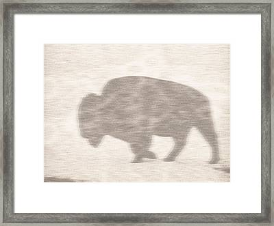 Bison Memory Framed Print by Anthony Robinson