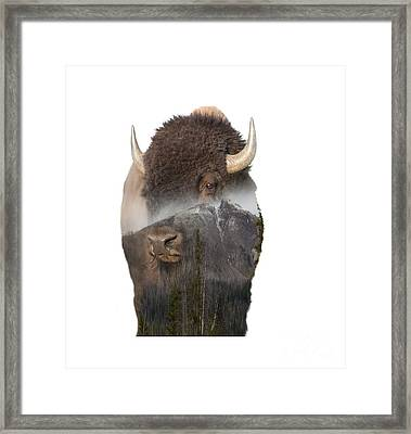 Bison Mountain  Framed Print