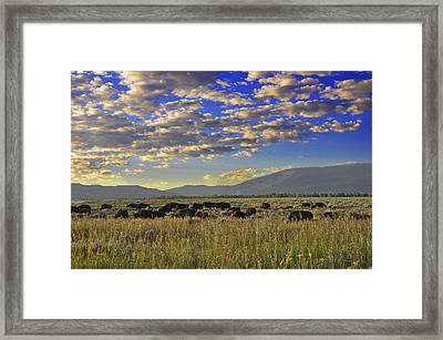 Bison On Antelope Flats Wy Framed Print by Vijay Sharon Govender