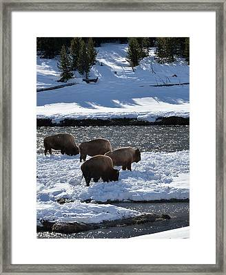 Framed Print featuring the photograph Bison On River Strand by Kae Cheatham