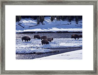 Framed Print featuring the photograph Bison On River Strand Landscape by Kae Cheatham