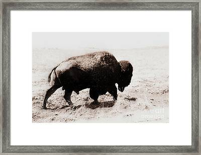 Bison On The Trail Framed Print by Mickey Harkins