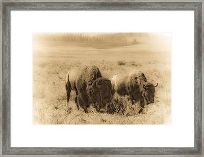 Bison Pair Framed Print by Patrick  Flynn
