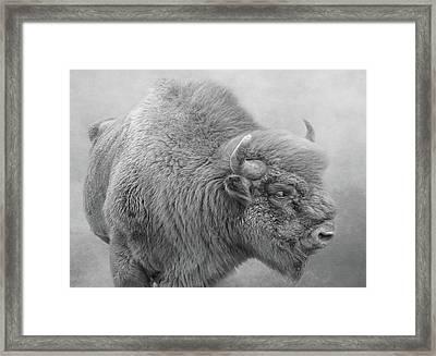 Bison Framed Print by Roy McPeak