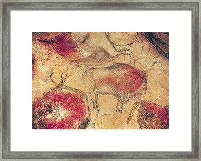 Bisons From The Caves At Altamira Framed Print