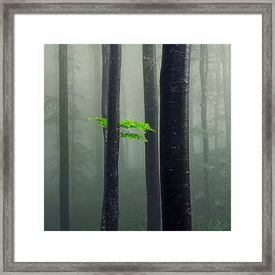 Bit Of Green Framed Print by Evgeni Dinev