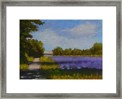 Bit Of Lavender Framed Print