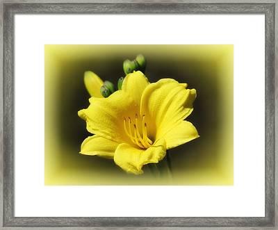 Bitsy Glow - Daylily Framed Print by MTBobbins Photography