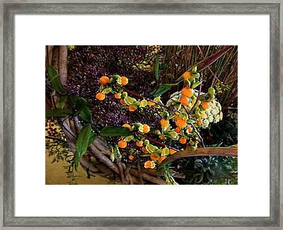 Bittersweet Basket Framed Print by RC deWinter