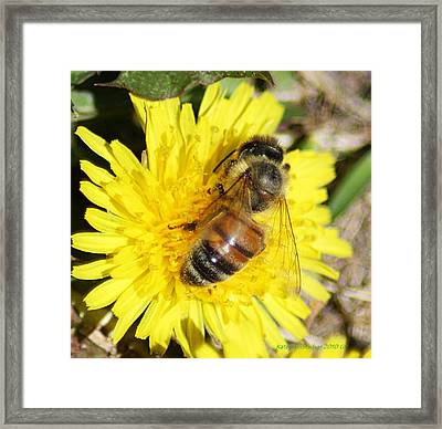 Bizzy Bee Framed Print by KatagramStudios Photography