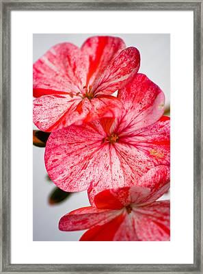 Bizzy Lizzy Framed Print