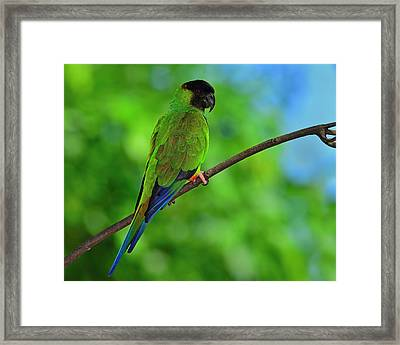 Black And Blue Framed Print by Tony Beck
