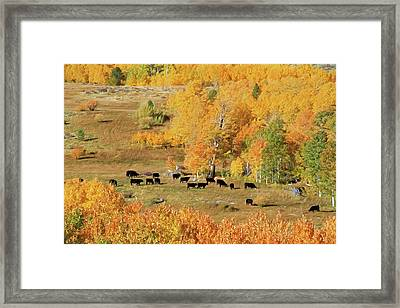 Black And Gold Framed Print by Donna Kennedy