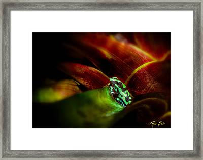 Framed Print featuring the photograph Black And Green Dart Frog In The Red Bromeliad by Rikk Flohr