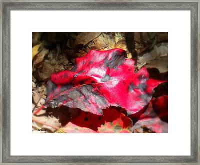 Black And Red Framed Print by Ed Smith