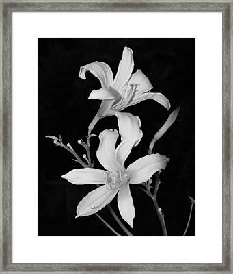 Black And White 001 Framed Print by William Bray