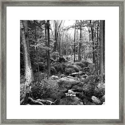 Black And White Babbling Brook Framed Print