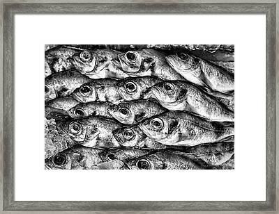 Black And White Background Of Fish. Framed Print by Andrei Orlov