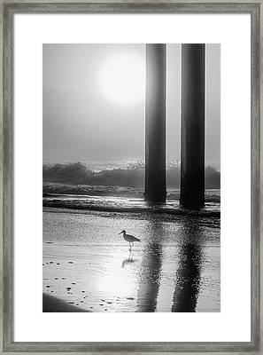 Framed Print featuring the photograph Black And White Bird Beach by John McGraw